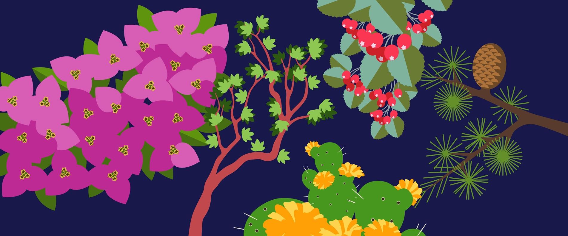 ТОП 5 растений Кипра