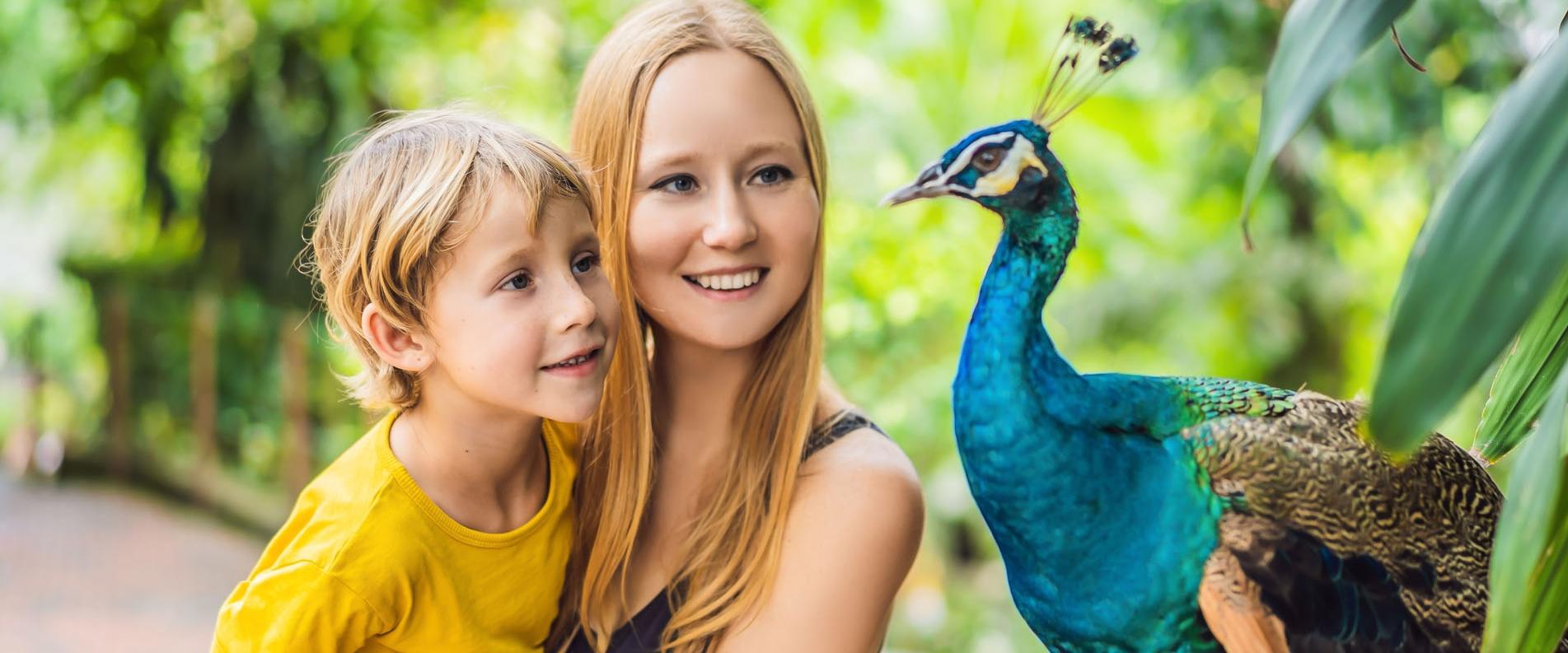 Гид по самым примечательным зоопаркам Кипра